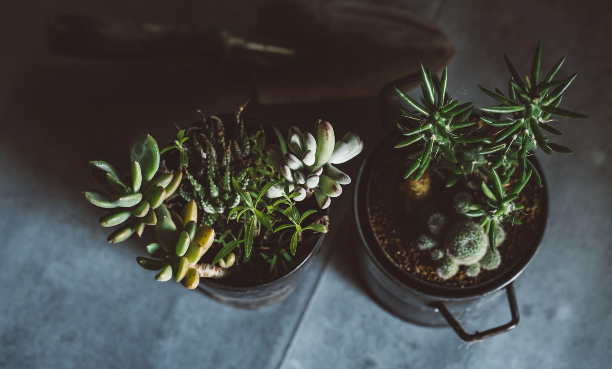 鉢寄せ・鉢花 イメージ画像
