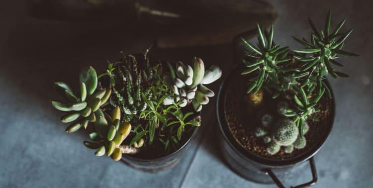 鉢寄せ・鉢花画像