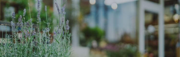 花の樹についてイメージ画像